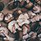 MushroomExtract.png