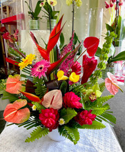 "A Hula dance for joy is what they, and everyone around them will want to do when receiving this LARGE SHOWSTOPPING tropical masterpiece! All of our super fresh tropicals are imported overnight directly from Costa Rica and Hawaiian farms. If your special someone loves UNIQUE then these LONG LASTING tropicals are something you should send. If you'd prefer a little sister version check out the ""Feelin' tropical"" for a just as happy reaction! These long lasting vibrant flowers arranged in a ceramic container will not disappoint :)  ***All online orders will be AS CLOSE AS POSSIBLE to the picture shown, minor substitutions for a similar flower might be necessary if the flower is not available or out of season. You can rest assured that each order is made with intention and LOTS of LOVE with only the freshest top quality flowers!container will not disappoint :)   ***All online orders will be AS CLOSE AS POSSIBLE to the picture shown, minor substitutions for a similar flower might be necessary if the flower is not available or out of season. You can rest assured that each order is made with intention and LOTS of LOVE with only the freshest top quality flowers!"