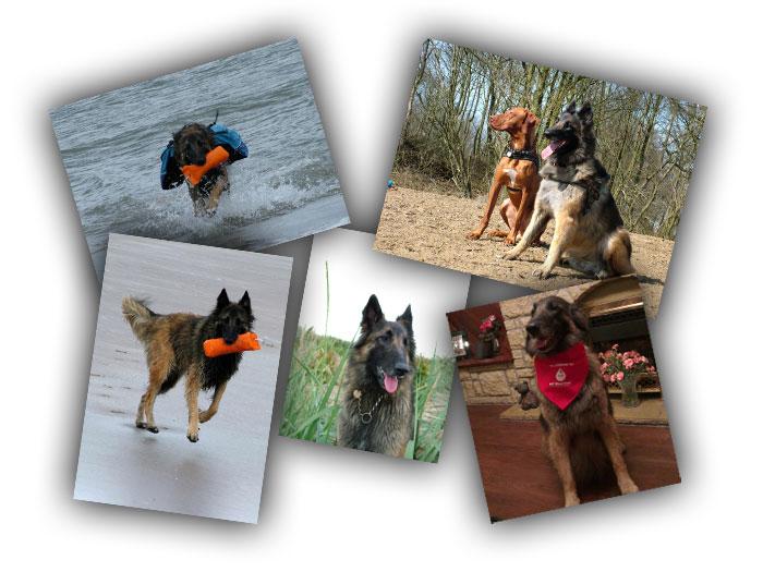 amber-collage2.jpg