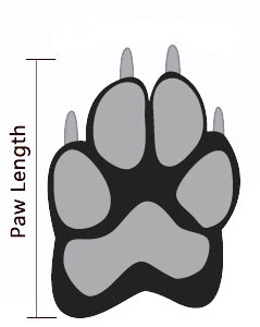 paw-measurement.jpg