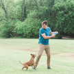 Chuckit Fetch Flight dog Frisbee at K9active