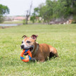 Chuckit Ultra ring chaser dog toy showing dog holding in mouth