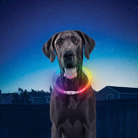 Nite Ize Nite HOwl Disc-o Select rechargeable LED safety Collar for dogs.
