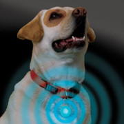 Spotlit Dog Collar Light for safer night time walks with your dog.