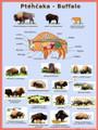Buffalo Ecology