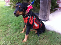 P.2. TERRIER FULL LENGTH BAY VEST