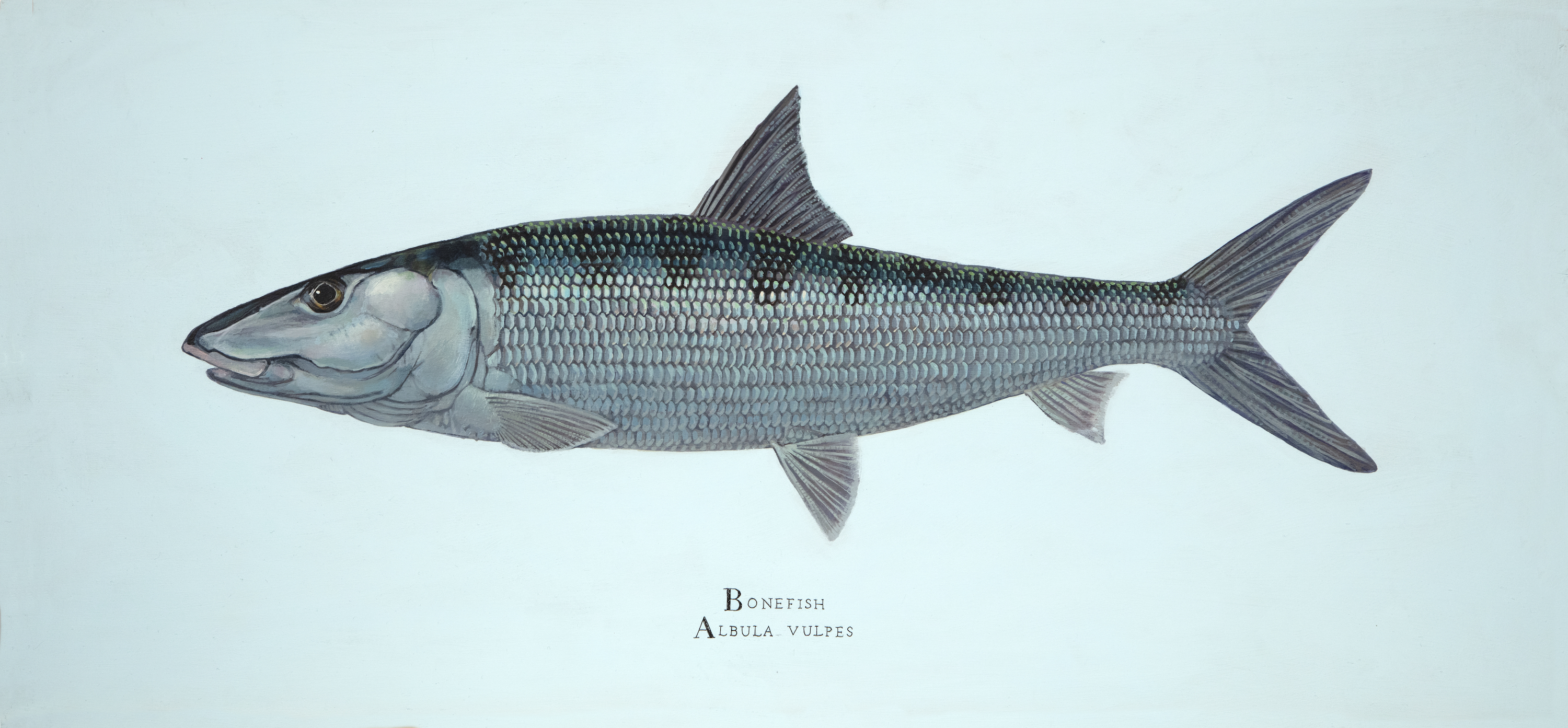 bonefish-small.jpg