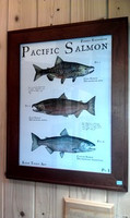 "Pacific Salmon, Plate 1 18""x24"" Limited Edition Print"