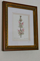 Hummingbird Sage (Salvia spathacea) Original Painting, Framed