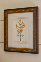 Monkey Flower (Mimulus aurantiacus) Original Painting, Framed
