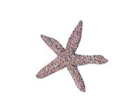 Ochre Sea Star (Pisaster ochraceus) 8x10 Matted Fine Art Print