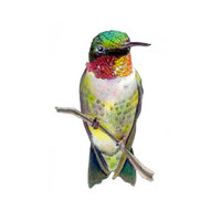 Ruby-throated Hummingbird (Archilochus colubris) 8x10 Matted Fine Art Print
