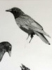 "Detail of ""Three Crow"" (unfinished pre-sale picture)"