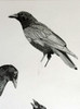 """This is a pre-sales picture of a detail of the original """"Three Crow"""" before it was finished, signed or titled by Karen."""