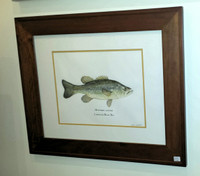 Largemouth Bass (Micropterus salmoides) Framed Original Painting
