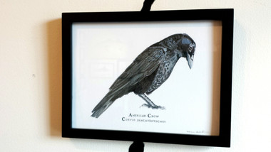 "This American crow illustration is framed in a wood 6""x8"" frame and is hand-signed by Karen."