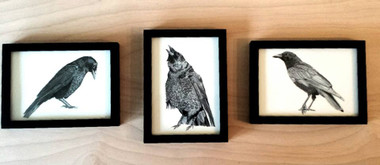 "The Three Crow Framed Set Includes Three Framed 5""x7"" Pieces."