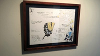 Framed Georges River Female Eastern Tiger Swallowtail (Papilio glaucus) Original Artist's Study #2