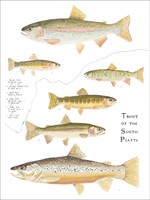 Trout of the South Platte 11x14 Matted Fine Art Print
