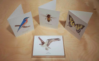 Mixed Notecard Set - Choose four Species from my current print catalog