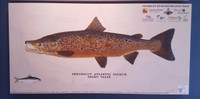 """Penobscot River Spawning Male Atlantic Salmon (Salmo salar) 48""""x 24"""" Gallery Wrapped Limited Edition Giclee Print"""