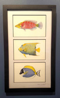Reef Fishes Triptych