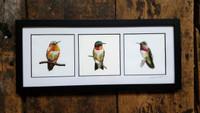"Hummingbird Triptych - 5""x5"" Openings"