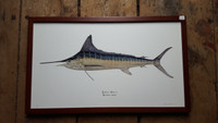 "Striped Marlin - WYSIWYG Framed - ~25""x15"""