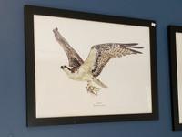 WYSIWYG Framed Osprey Ltd. Ed. Giclee Print (Frame Blemish)