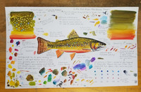 Original Brook Trout Study (2020) #3