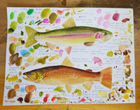 Original Rainbow and Brown Trout Study (2020) #5
