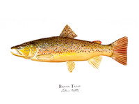 "Brown Trout (2020-Watercolor) 11""x14"" Matted Fine Art Print"