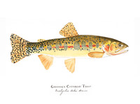"Greenback Cutthroat Trout (2020-Watercolor) 11""x14"" Matted Fine Art Print"