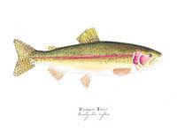 "Rainbow Trout (2020-Watercolor) 8""x10"" Matted Fine Art Print"