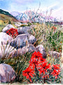 Division Creek Paintbrush
