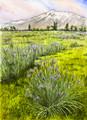 Round Valley Wild Iris, Bishop, CA