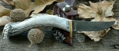 Silver Stag - Swoop Crown - Whitetail Stag  Handles - Damascus Steel