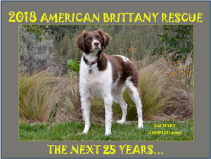 It's here! The New 2018 ABR Calendar featuring ABR alums, rescued and forever loved! Get yours today and enjoy year round Brittany pictures!