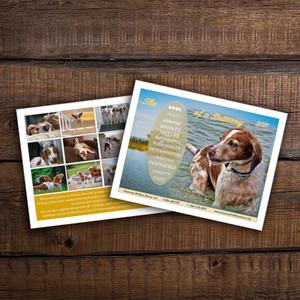 2021 American Brittany Rescue Calendar