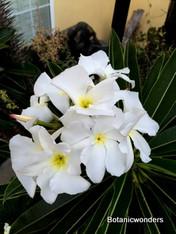 Fragrant flowers!