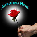 Appearing Rose - Imported