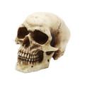 """PT08848 - 4"""" Small Skull"""