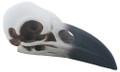 """YTC8584 - 2.5"""" Raven Skull"""