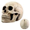 YTC8146 - Skull Money Bank