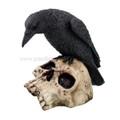 """PT09786 - 5"""" Raven on Skull"""