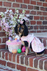Pink Floral Easter Dog Dress