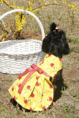 All That Buzz Dog Dress