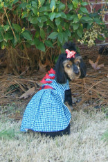 Blue Apple Checkered  Dog Dress