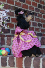 Elegant Pink and Mauve Couture Dog Dress