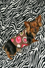 Brown Polka Dot Dog Dress